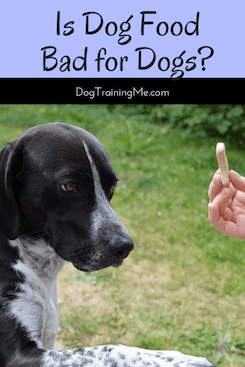 is dog food bad for dogs