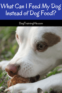 what can I feed my dog instead of dog food