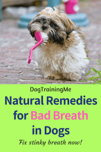 natural remedies bad breath in dogs