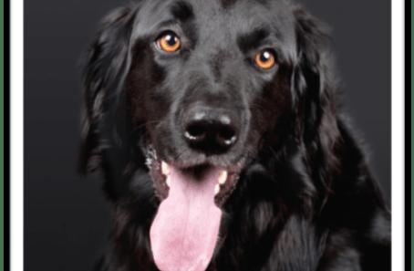 the best dog brush