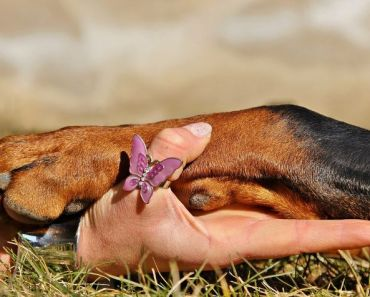 dog paw moisturizer