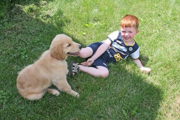 best dog breeds for kids