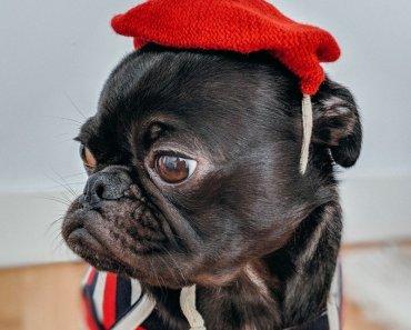 latest dog fashion