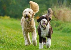 dogtrix-daycare