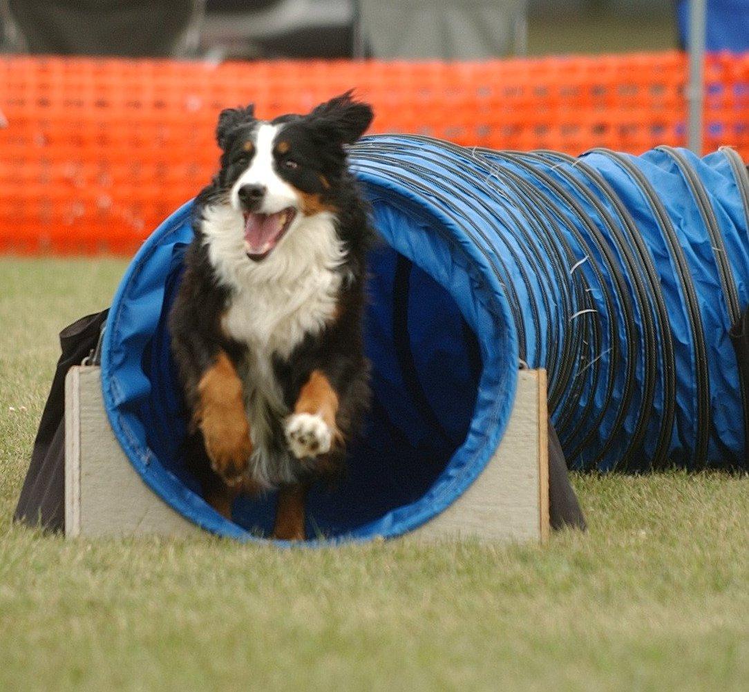Agility Dog  Rendi il tuo cane un vero atleta