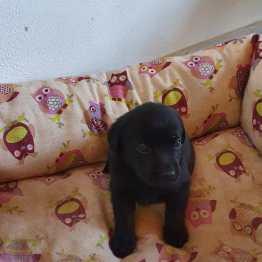 cuccioli nuovi nati by Dogvillage Cunardo_5