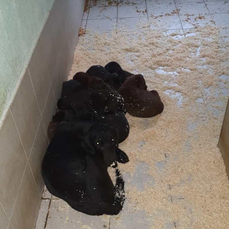 cuccioli nuovi nati by Dogvillage Cunardo_6