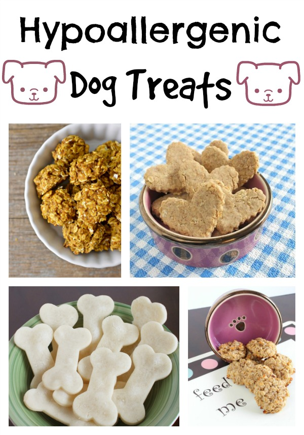 looking for amazing hypoallergenic dog treat recipes your pooch