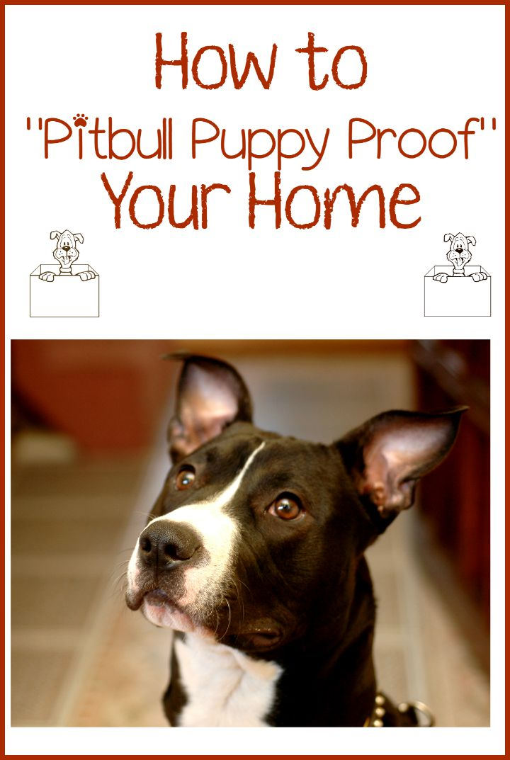 Pitbull Puppy Training Tips  Dog Proofing Your Home