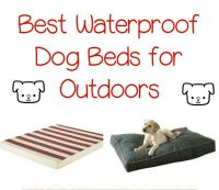 The Best Waterproof Dog Beds for Outdoors - DogVills