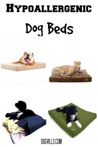 10 Best Hypoallergenic Dog Beds and Blankets (Complete guide)