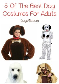 5 Of The Best Dog Costumes For Adults To Wag Your Tail About