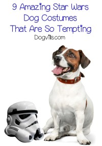 9 Amazing Star Wars Dog Costumes That Are So Tempting ...