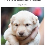 10 Adorable New Puppy Announcement Ideas Http Www Dogvills Com
