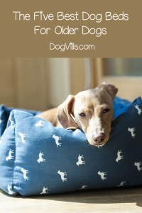 The Five Best Dog Beds For Older Dogs - DogVills
