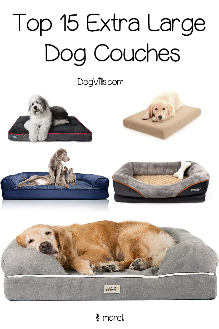 15 Best Extra Large Dog Couches  DogVills