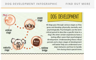 dog development infographie