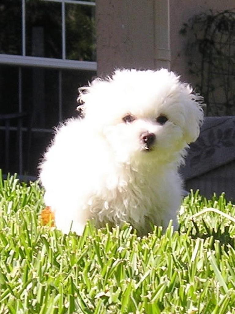 Cute N Lovely Wallpapers Cute Aidi Puppy Photo And Wallpaper Beautiful Cute Aidi
