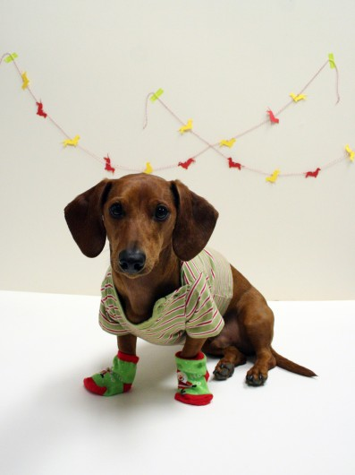 V Letter 3d Wallpaper Nice Dachshund In Christmas Day Photo And Wallpaper