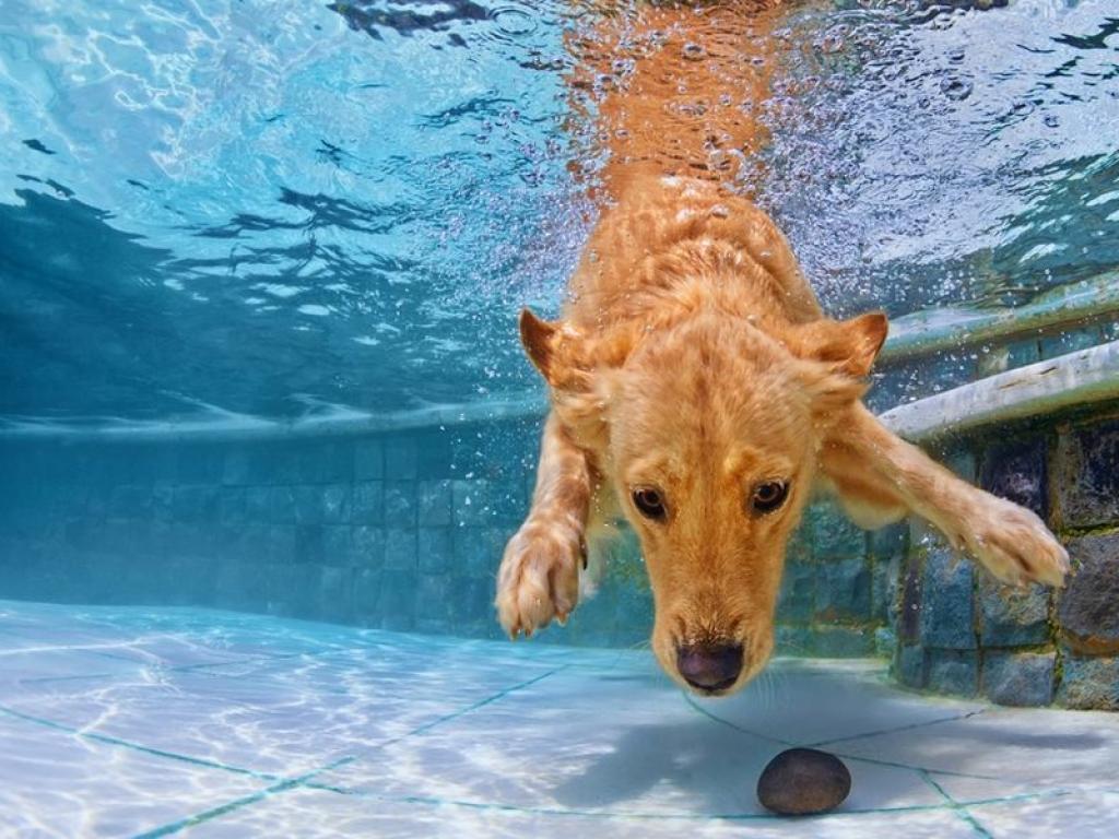 Hotel e agriturismo con piscina per cani Dogwelcome