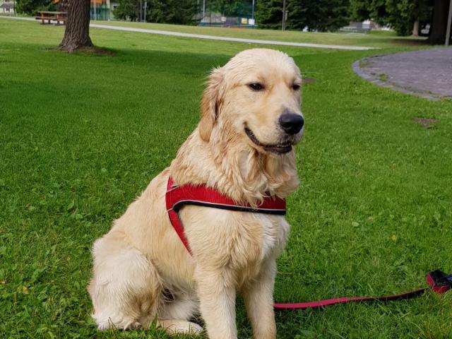 Con il cane in Val di Non Dogwelcome Itinerari gite e