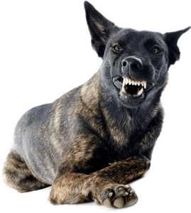stop a dog being aggressive | Stop Aggressive Dog Behavior | how to calm an aggressive dog