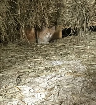Junior hiding in the hay