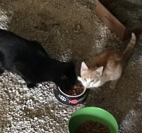 Blackie and Junior eating breakfast
