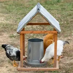 Natural Garden Living with Homemade Chicken Feed