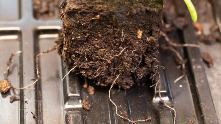 Should you use soil blocks?