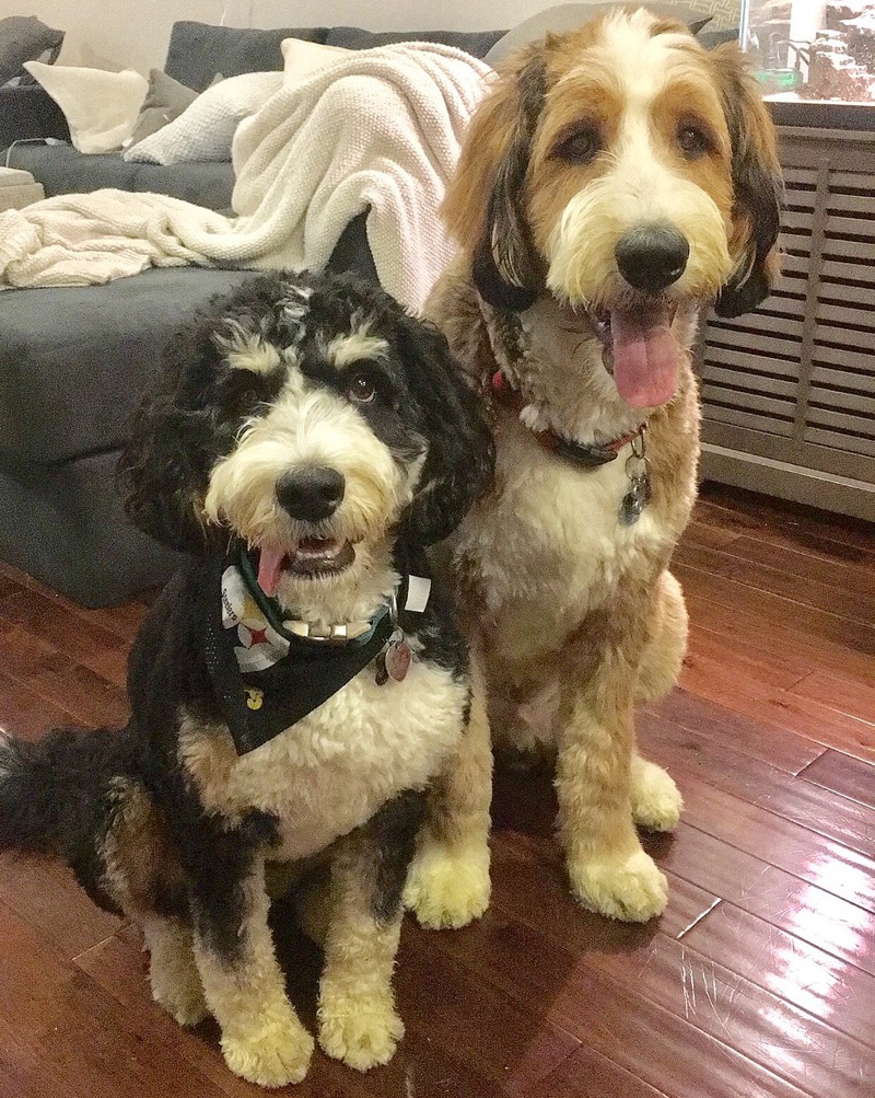 Picture And Brown Black Black Dog And White Same Dog And