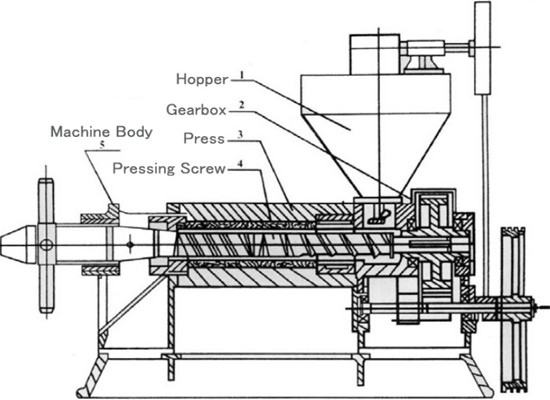 What is the screw oil press machine and what is it used