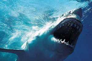 art-shark-620x349_38337_0