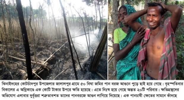 Jhenidah 50 Bigha Batel leaf Fire Photo_05