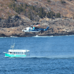 Cougar Helicopter hovering over O'Brien's Tour Boat in Bay Bulls