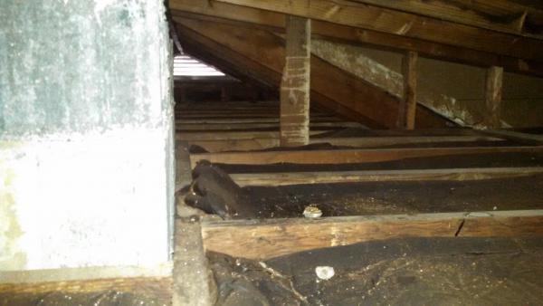 Attic Crawl Space Insulation  1958 Cape Cod Home  DoItYourselfcom Community Forums