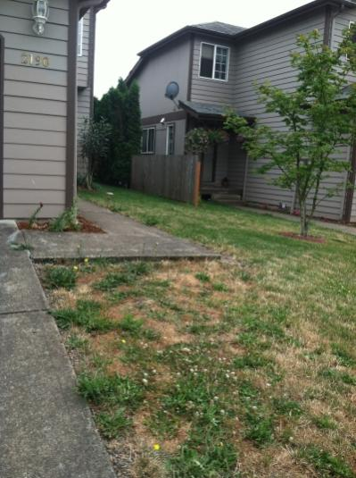 landscaping ideas needed