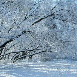 A Winter 2021 Purim Grammen for Dallas, Texas