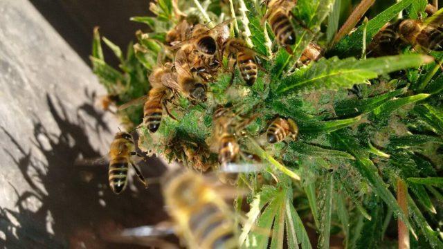"""Le api di Nicolas al """"lavoro"""""""