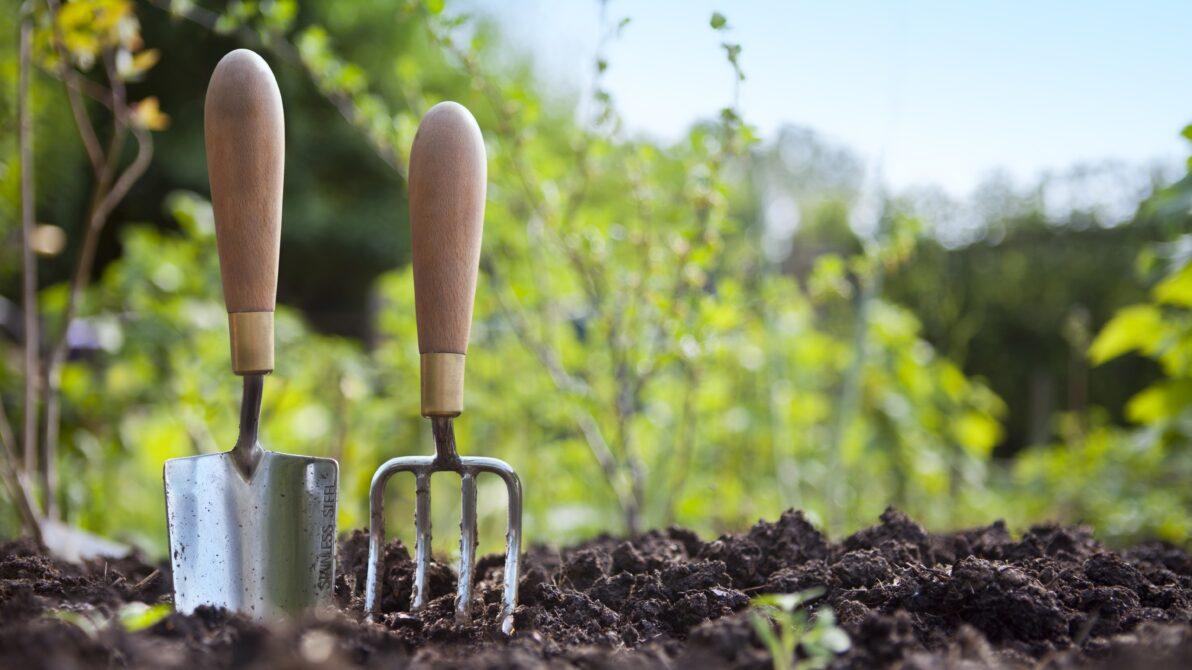 Calendario dellorto cosa piantare e raccogliere mese per
