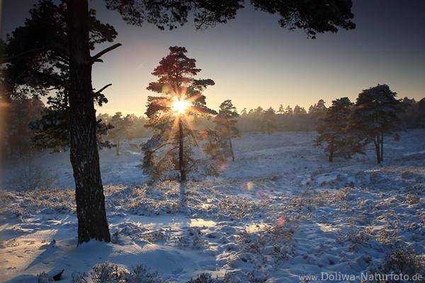 Baum berstrahlt durch Sonnenstern ber Winterlandschaft Schnee scheinen in Naturfotografie