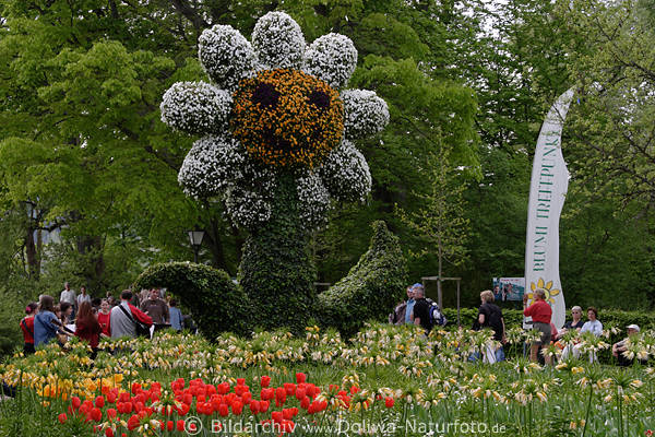 Riesenblume aus Pflanzenblten Foto Gartenschau Musikanten