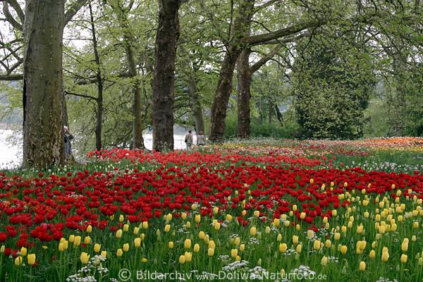 Blteninsel Blumenfeld am Seeuferweg Gartenfoto unter