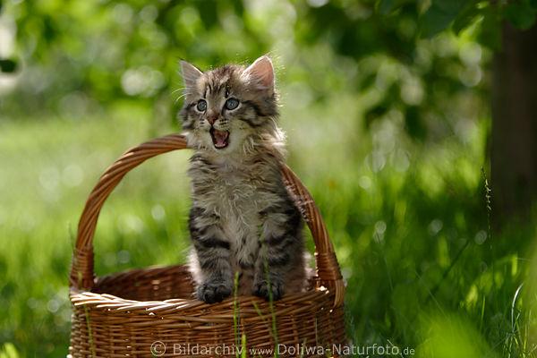 Katzekind im Korb Ktzchen im Flechtkorb Foto auf Wiese