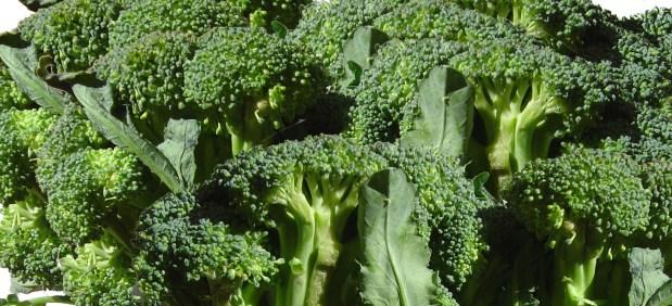 Bolognese mal anders – Brokkoli-Bolognese