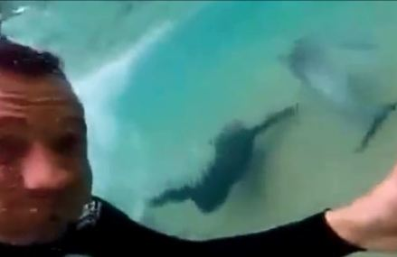 Dolphin plays with surfers