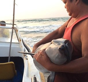 Baby dolphin rescued by locals