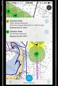 Whale Alert app helps avoid whale collisions