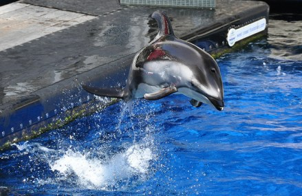 Bill to End Dolphin and Whale Captivity Reintroduced In Canada