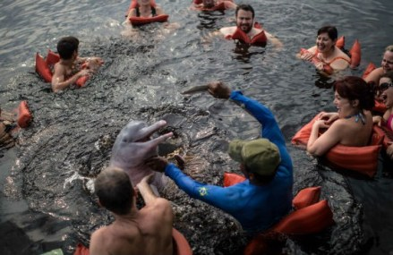 Tougher controls on swim-with-dolphin programs proposed in USA
